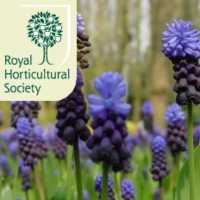 Chelsea Flower Show Tickets
