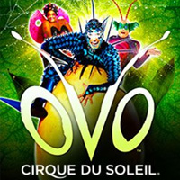 Cirque Du Soleil OVO tour dates and tickets